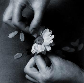 عکس+گل+دادن
